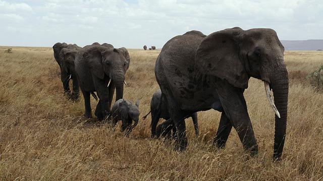 A yoga teacher, an acupuncturist, and Five Elephants walk into EHY….